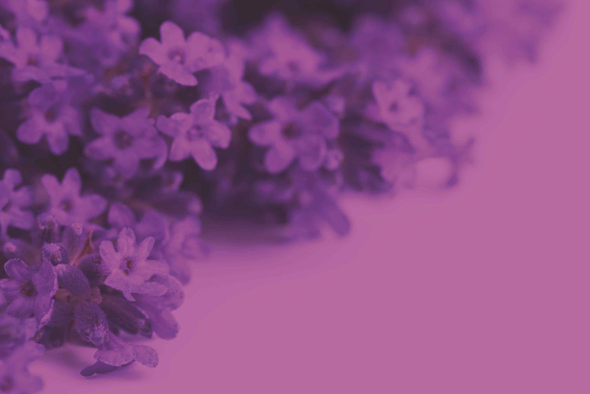 fialová altearah bio