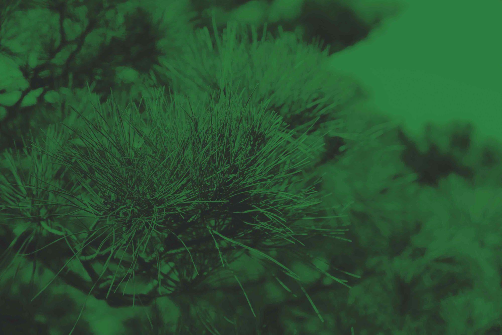 smaragdová altearah bio